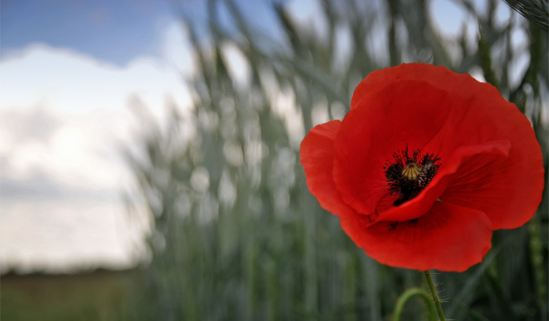Pay your respects from home this Remembrance Day
