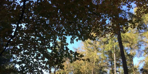 Photo of sunny blue sky seen through leaves and trees