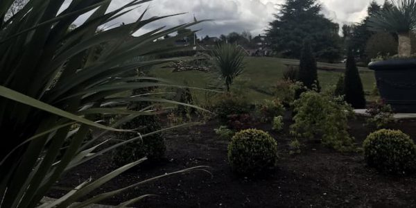 Shrubs and conifers in the central bed at Kingsway Gardens