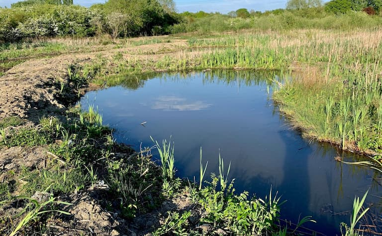 Photo of a crescent shaped pond in the corner of a field