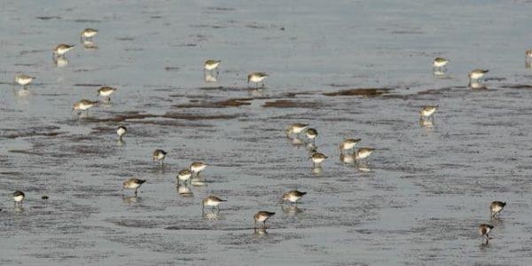 Seabirds on water