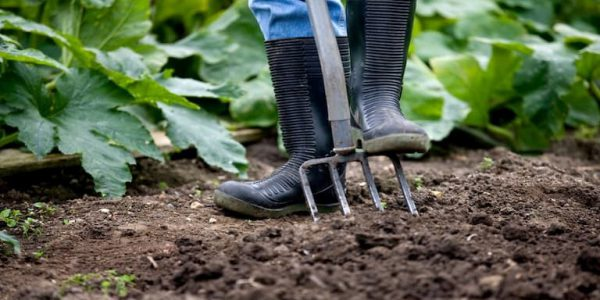 Man digging on Allotment - web