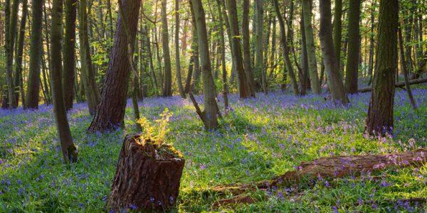 Brumby Wood