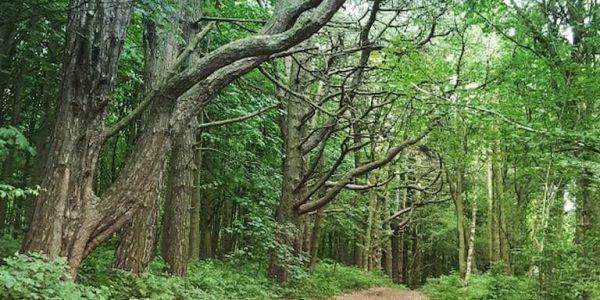 A picturesque path through Twigmoor Woods (photo: Hebbwah)