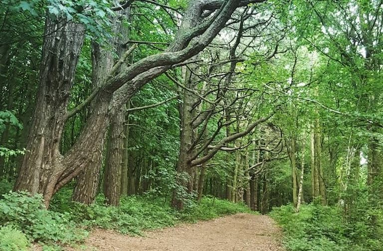 Help needed to restore and protect Twigmoor Woods