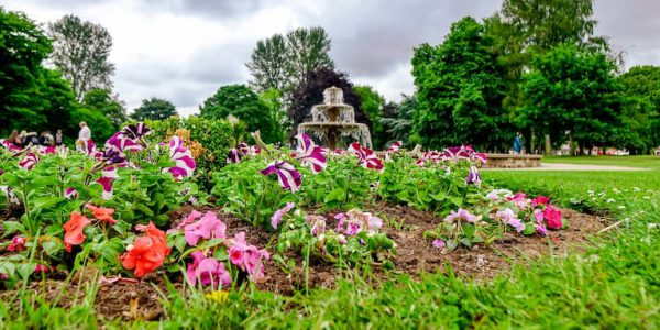Photo of petunias in a flower bed with Central Park fountain in the background
