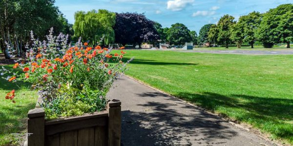 Photo of a wooden planter with orange flowers next to green grass and skate park and mature trees in the background at Sheffield Park