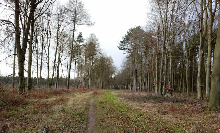Appeal for landowners to join tree planting scheme